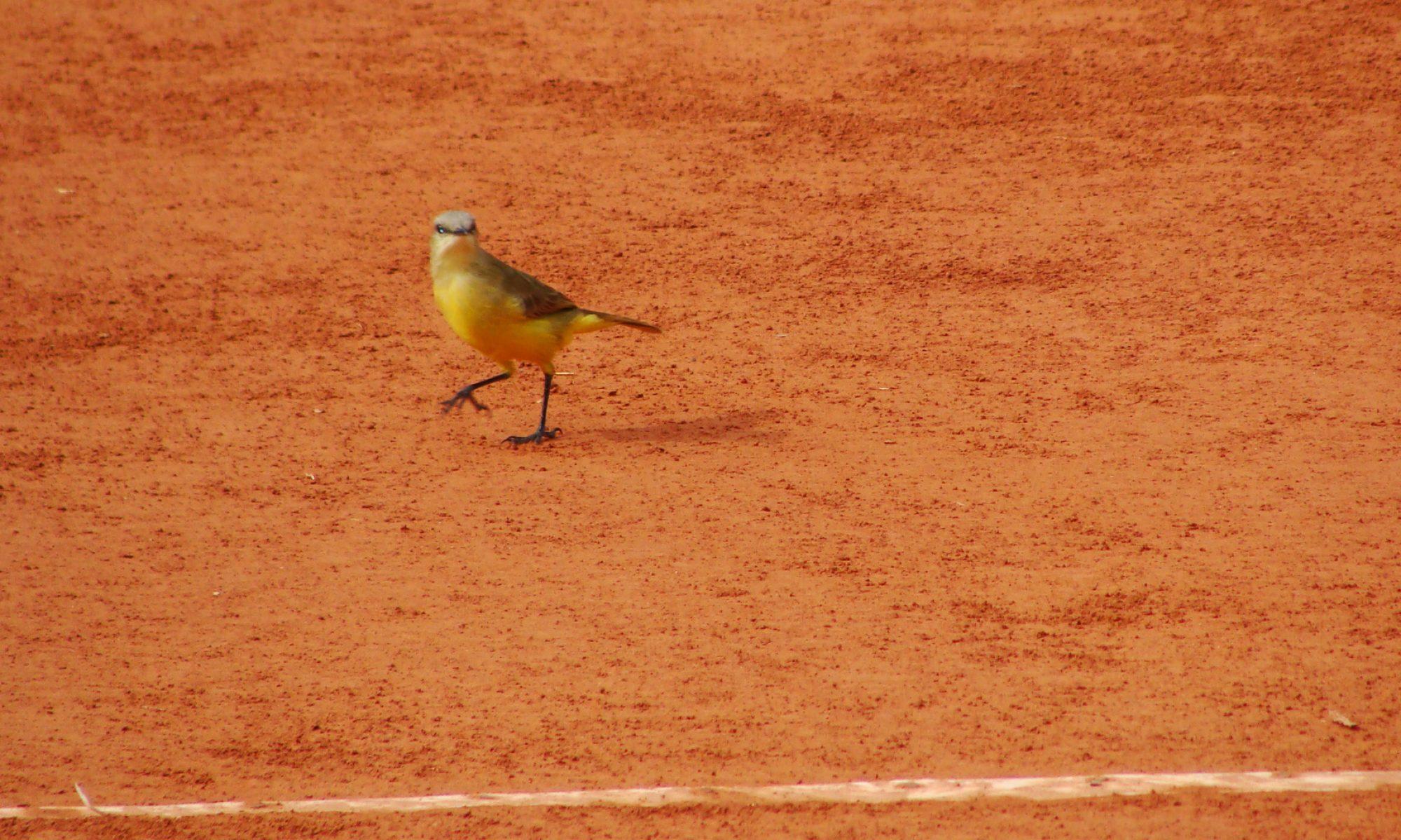 TenisUNCuyo